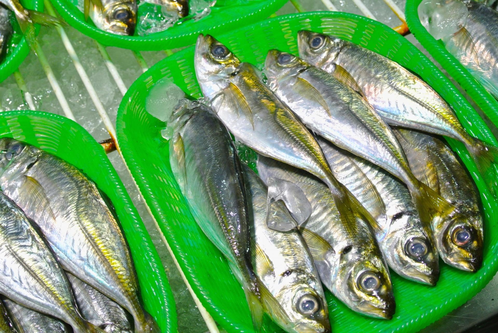 アジングの始め方|釣り方やおすすめのタックル・仕掛けを解説!